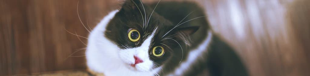 Gato. tienda de mascotas Kiwoko
