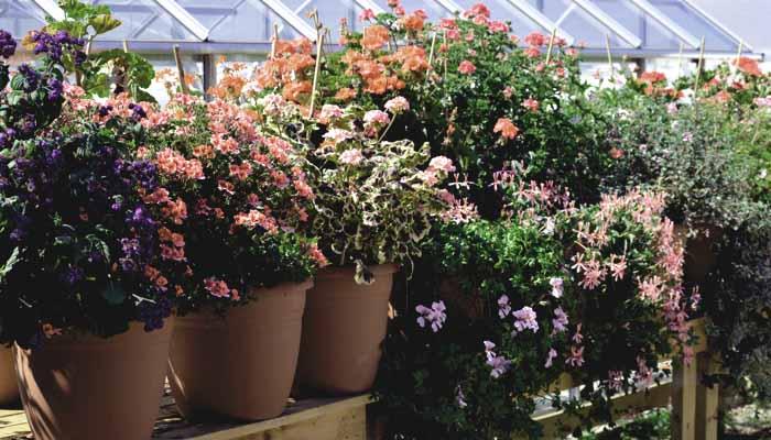 convenio flores y plantas