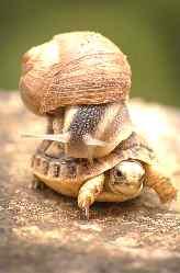 Tortuga y caracol. Lentitud de la patronal de contact-center